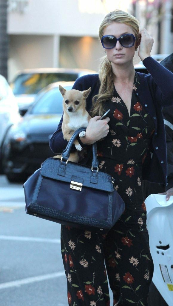 Paris-Hilton-outfit-dog-2015-03